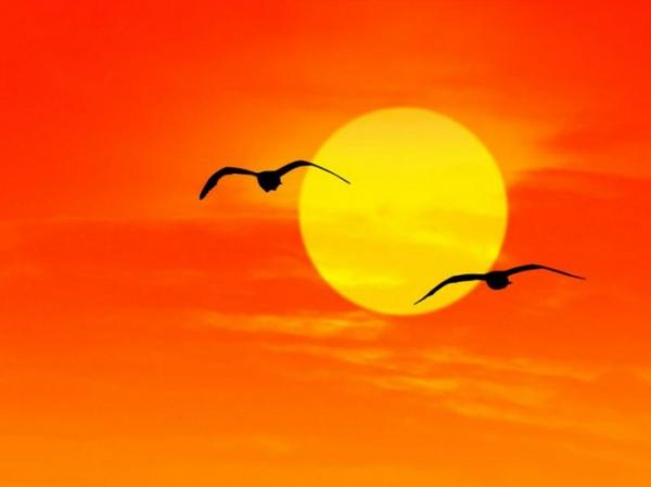 Птицы : Birds, Seagulls at Sunrise Florida, , Коллекция фотографий и...